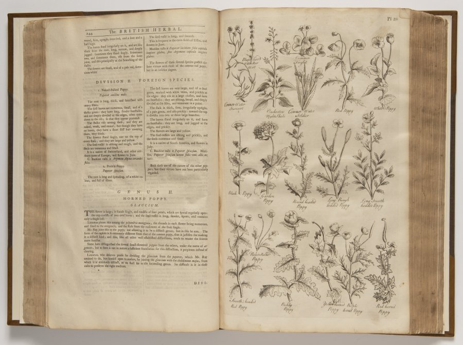 The British Herbal : An History of Plants and Trees, Natives in Britain, Cultivated for Use, or Raised for Beauty.