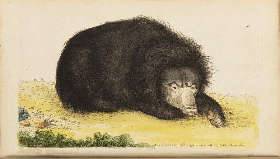 Vivarium Naturae or the Naturalist's Miscellany. Vol. I.-III